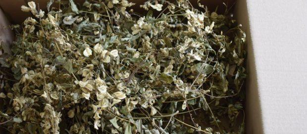 Rețete vechi din plante medicinale!